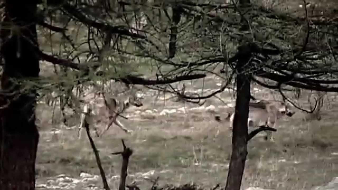 Pillole di natura: A tu per tu con il lupo